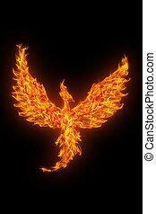 brennender, phoenix, aus, freigestellt, schwarzer ...