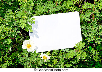 Briar bush with blank paper