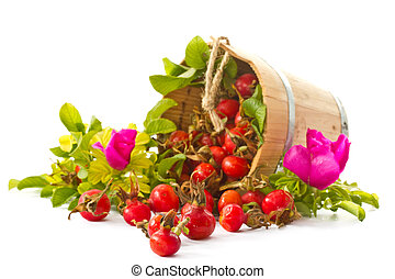 Briar - fruits and flowers of wild rose on a white...