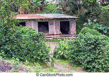Brick Building on a Coffee Plantation
