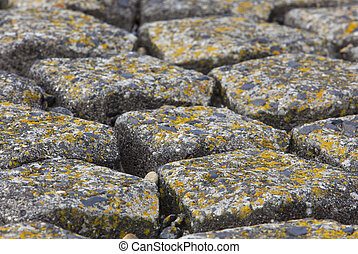 brick on the dike in the netherlands