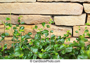 Brick wall background texture - vintage with tree