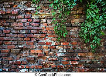 brick wall overgrown we flatten - old brick wall overgrown...