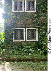 brick wall with climbing tree, plant wall with white window