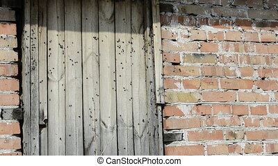 brick wall with flies