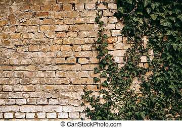 Brick wall with green ivy background