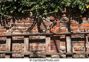 Brick wall with ivy and ladder