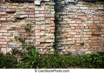 Brick wall with ivy.