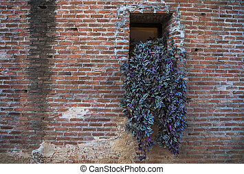 Brick wall with ivy