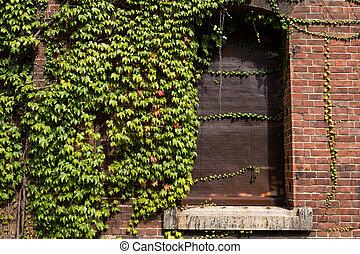 Brick warehouse and creeper