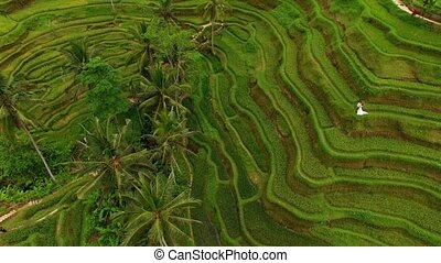 Bride and groom in rice fields aerial