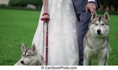 Bride and groom with husky dogs in park