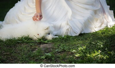 Bride in white dress gently caress samoyed puppy who lies near her legs