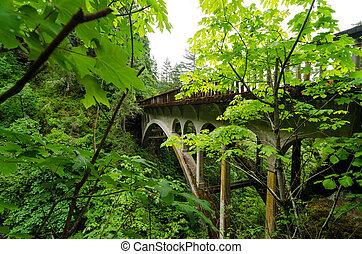 Bridge and Lush Vegetation
