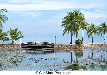 Bridge at tropical garden