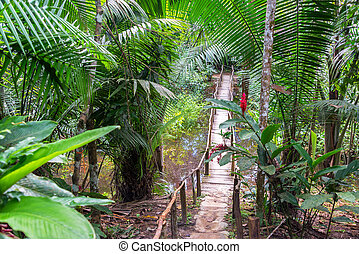 Bridge in a Rain Forest