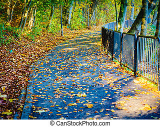 Bridge in autumn park