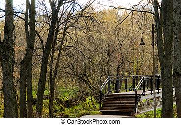 bridge in the park