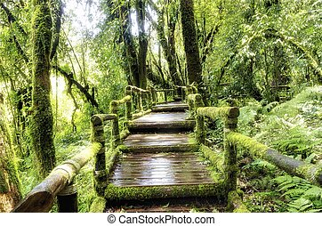 Bridge in to the jungle ,Doi inthanon national park, Thailand , Asia