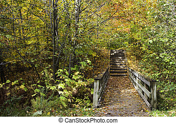Bridge on the trail in the forest