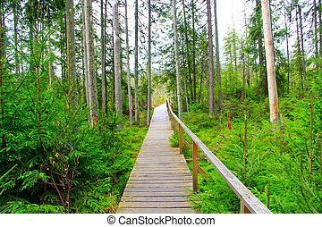 Bridge over a swamp in the forest