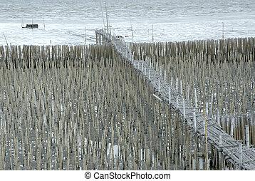 Bridge over Bamboo Wall.
