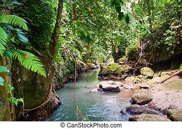 Bridge over river in the jungle of Bali - Bridge over river...