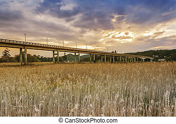 Bridge over the reedbed - Bridge over Umia river reedbed on...