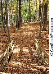 Bridge through autumn woods2