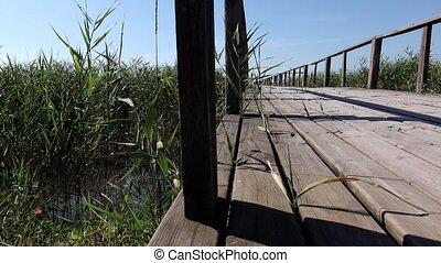 Bridge through the reeds on the lake. Dolly
