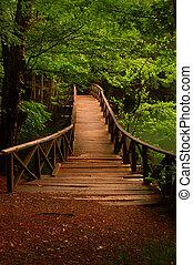 Bridge to the jungle Seven Lake Bolu Turkey