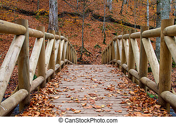 Bridge with Autumn Leaves in Bolu