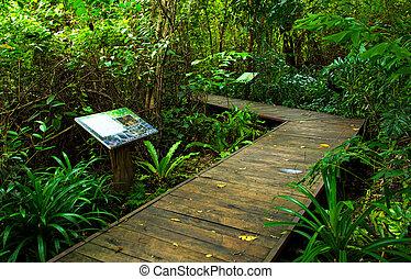 bridzs, fából való, nemzeti park, erdő, gyalogjáró