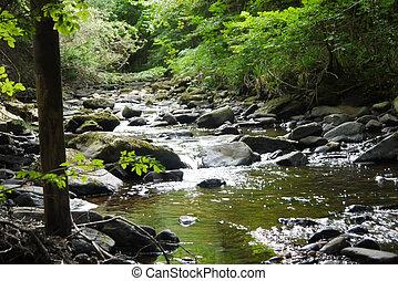 bridzs, folyó, erdő