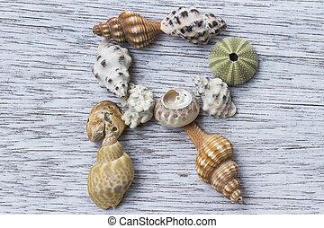 brief, r, gemacht, von, seashell