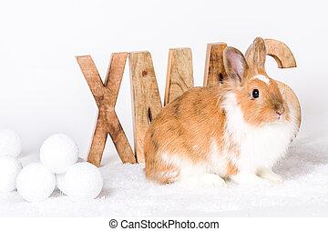 briefe, weihnachten, kaninchen