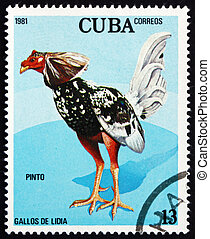 briefmarke, kuba, 1981, pinto, kämpfen, hahn