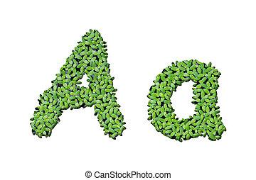 """brieven, alfabet, vrijstaand, eendekroos, achtergrond, """"a"""", witte"""