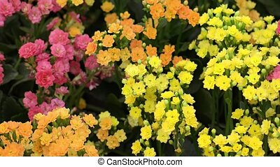 Bright and Cheerful Flowers in a Public Garden Park -...