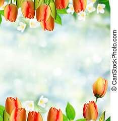 Bright and colorful flowers tulips on the background of spring landscape.