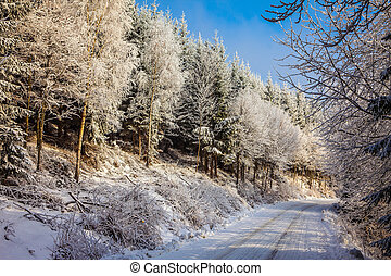 Bright and sunny morning in snowy forest