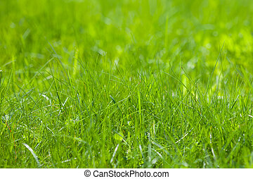 light green spring grass