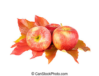 Bright autumn apple fruits. Red apples with fall leaf isolated on white.
