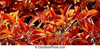 bright autumn colours...
