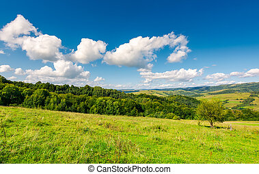 fluffy clouds on a blue sky above rural landscape - bright...