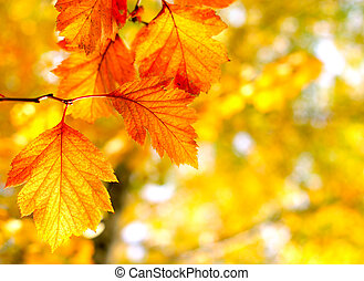 autumn foliage - Bright autumn foliage close up