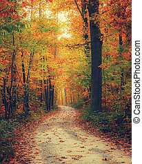 Bright autumn forest - Pathway in the autumn forest