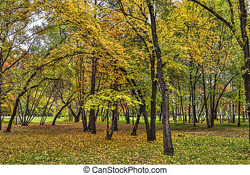 Bright autumn landscape in the city park with golden foliage of trees