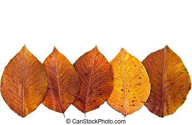 bright autumn leaf,