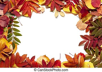 Bright autumn leaves as a background. Isolated on white